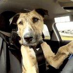 The @MA_Senate has passed a bill that lets passersbys break car windows to free hot pets: https://t.co/U9IztrZUPD https://t.co/RBBTbnXWym