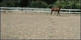 OMG THE HORSES ARE LEARNING PARKOUR https://t.co/Yv7pcbFOrc