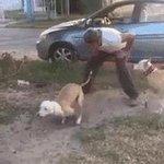 Такую собаку за забором лучше не дразнить. https://t.co/ZMabk55nc3