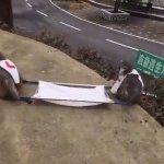 imagens do treinamento no brasil pra caso de terrorismo na olimpiada https://t.co/fpFMT26Tap