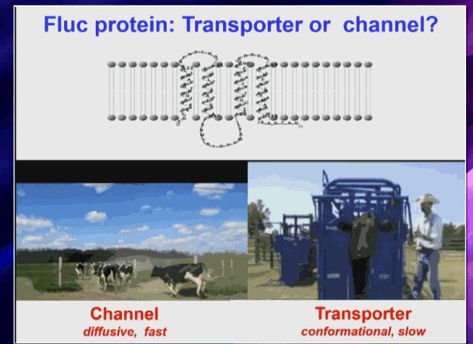 https://t.co/BUF9tcXBUj Confused about difference btwn ion channels & transporters? Cows will help #physiology2016 https://t.co/kH7b7eddqG