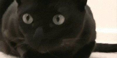 Thanks for the love guys! #blackcatappreciationday https://t.co/ZyD0nZ77Dd