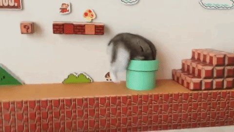This hamster is way better at Super Mario than you are https://t.co/jIhdPuEldK https://t.co/OUFFqOfizP