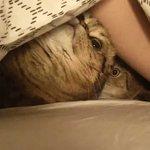 Кошачье гнездо https://t.co/l0kOpwK8gd