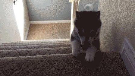 Michael Bay's Dog https://t.co/UsXkgYdGtI