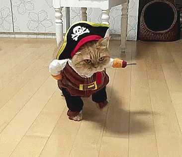 Where be the Fancy Feast? #TalkLikeAPirateDay https://t.co/s8spvDi8YE