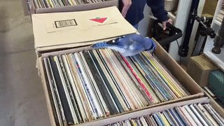 just a blue jay digging through some records https://t.co/KrqtNNH0FO