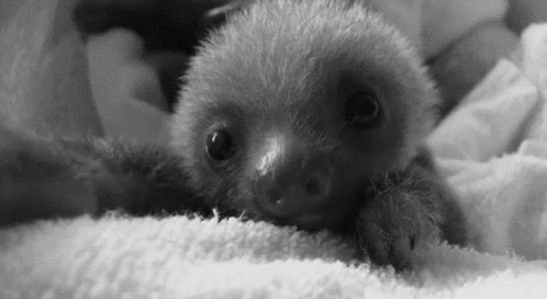 Take a couple of seconds to look at this baby sloth. Let the calmness wash over you. https://t.co/uBJZZdMZi1