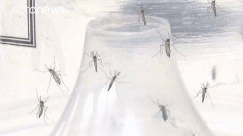 Zika virus no longer declared an international emergency by