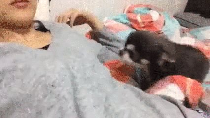 RT @AaliyahNevaeh7: #FavoriteSimplePleasures dog cuddles are my favorite ❤️🐶 https://t.co/0c1d3F7LPI