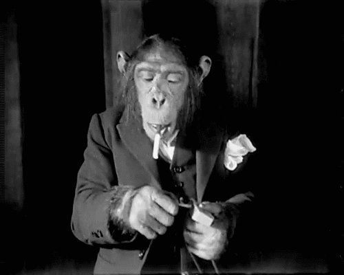 Monkey Trial: Chimpanzees aren't people, don't have right for habeas corpus - New York court