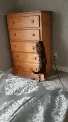 RT @CUTEFUNNYANIMAL: Hide and seek level: expurrt https://t.co/Z3JWRtoiN3
