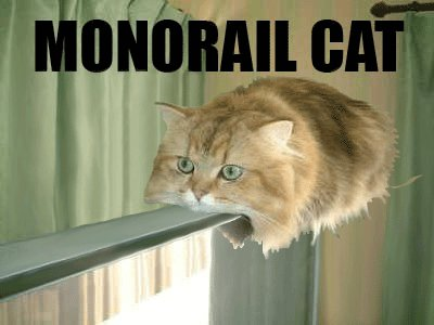 Attention passengers. Monorail Cat is experiencing service delays of up to 3 hours due to lack of cat toys. https://t.co/32DsYQVAoH