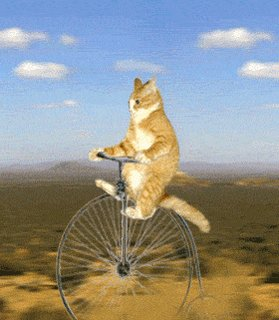 RT @photobucket: Decided to take the scenic route this morning. 🐈🚲 Happy #BikeToWorkDay! https://t.co/pfsgpUHEkT https://t.co/ADdIlfH12j
