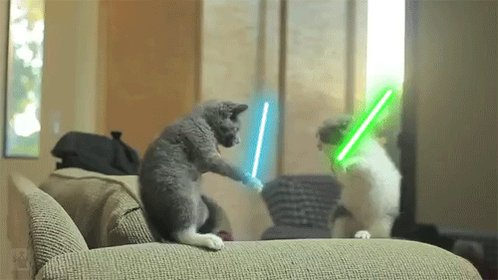 Se viene agosto y los gatos lo saben 🐱😽😼😻😾... andan peleando por ahí.... 😒 #NocheDeDecirLoQuePienso https://t.co/1fSiSqxLa4