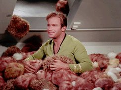 RT @EmmaleaT: #ThingsNeverSaidOnStarTrek  Captain, you dumbfuck! You weren't supposed to feed them after midnight! https://t.co/gGNgVl7w1N