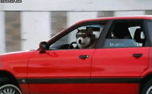 The fuck you honking at?! #NationalDogDay https://t.co/2PLGabOgX9