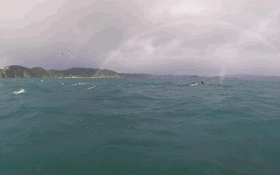 #ImLookingForwardTo when all orcas are swimming here ❤️ #BoycottSeaWor...