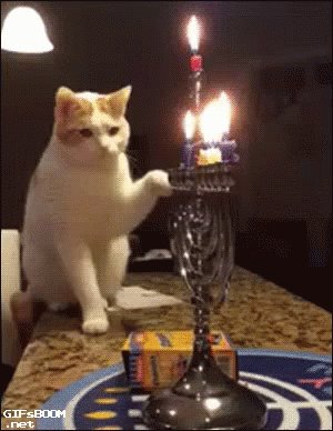 RT @TheBloggess: Happy Hanukkah, sweet friends!  (And a reminder to keep your most flammable cats in check.) https://t.co/U2gLwduKAY