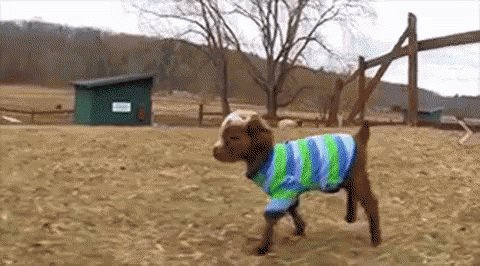 RT @LateRoundQB: Footage of Josh Gordon in his new sweater. https://t.co/39b43xmRKa