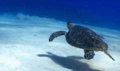 RT @VISITFLORIDA: Just keep swimming. #WorldTurtleDay #LoveFL https://t.co/IfPzc02BoX