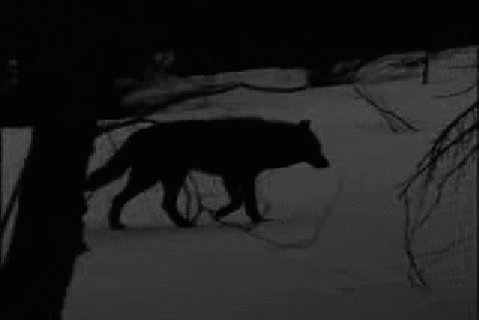 RT @Exile1Self: I am the lone wolf,there is no #InOurGang for me. https://t.co/O0Gj79VJ9j