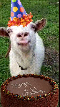 It s birthday today! Let\s all wish her a big \Happy Birthday\, with lots of onesies and goats!
