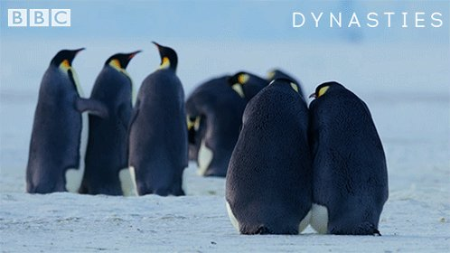 RT @BBCEarth: When it all kicks off in the group chat  #Dynasties https://t.co/XMYdYGK18O