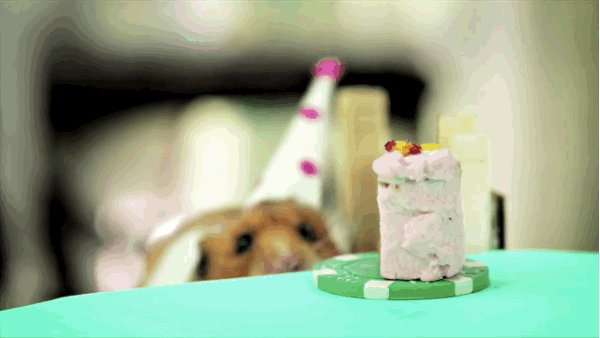 Happy birthday to you Taylor lautner