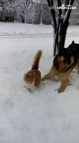 Good Morning. Today is World Snow Day. Pranks! Haaa. https://t.co/ZyZc0Pb4wu