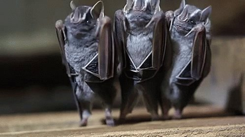 #StephenMillerWedding These guys were seen in the reception line. They're the newest members of #TRump's cabinet.