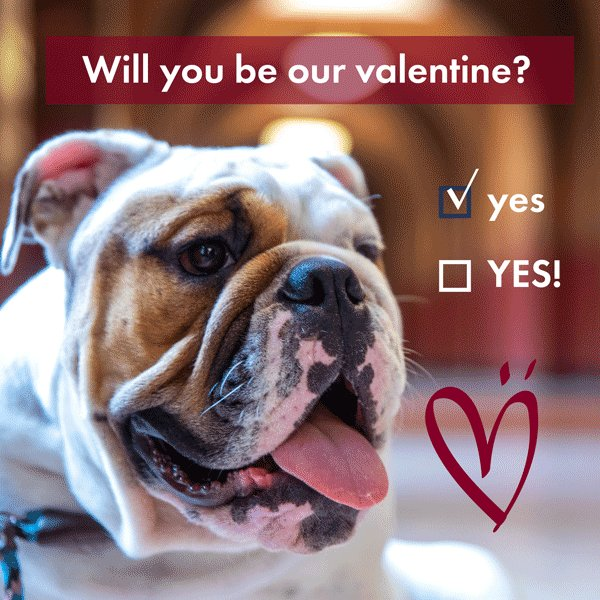 RT @GUAlumni: Happy #ValetinesDay Hoyas, from our favorite valentine @GeorgetownJack! ❤️ https://t.co/Wfu1Th0OTp