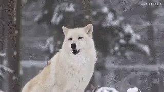 RT @NCStateAlumni: Waking up this morning like ⬇️ #HowlBack https://t.co/1JvSXulq2O