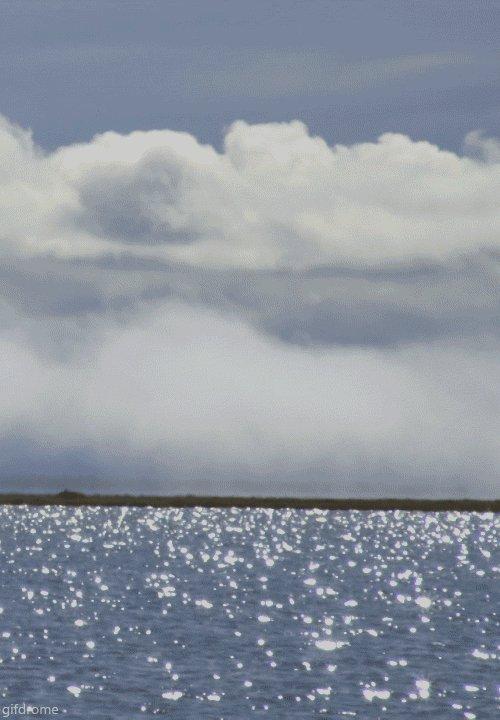 See Gray Whales Migrating Along California's Coast
