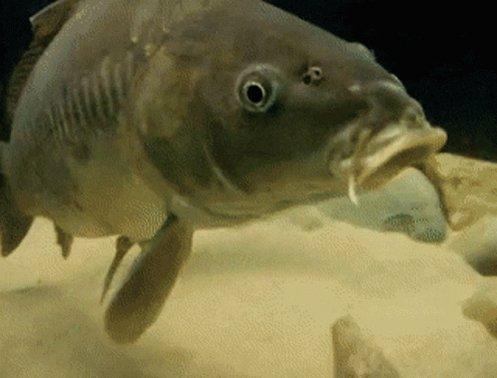 Do you fish carp in #<b>South</b>ern #ontario ? I want to hear from you!  #carpfishing  #invasivespe