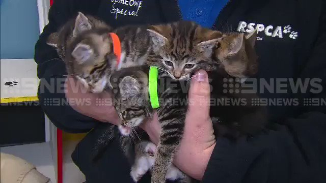 Image for the Tweet beginning: ADORABLE: These fur-tunate kittens were