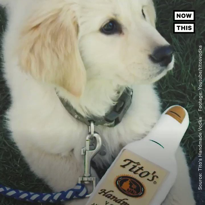 Tito's Vodka has helped place over 70 stray dogs into homes