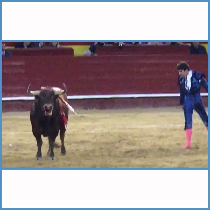 Animals bleed to death inside a stadium while humans cheer �� How are bullfights STILL happening?! https://t.co/OM0R1jjHBw