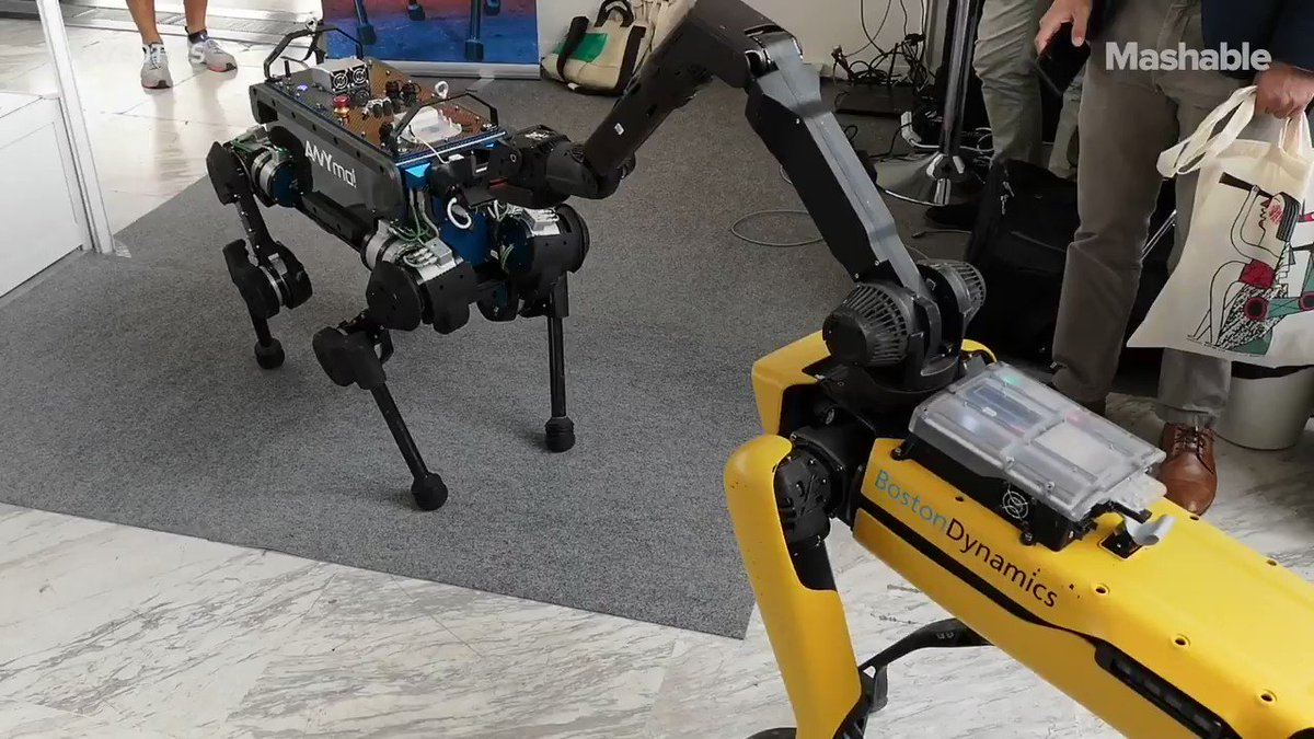 The robot dog empire is upon us