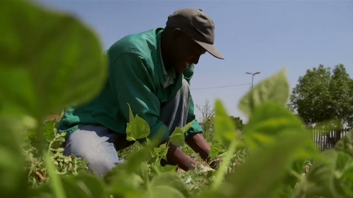 From crops to shops: South African app boosting small-scale farmers