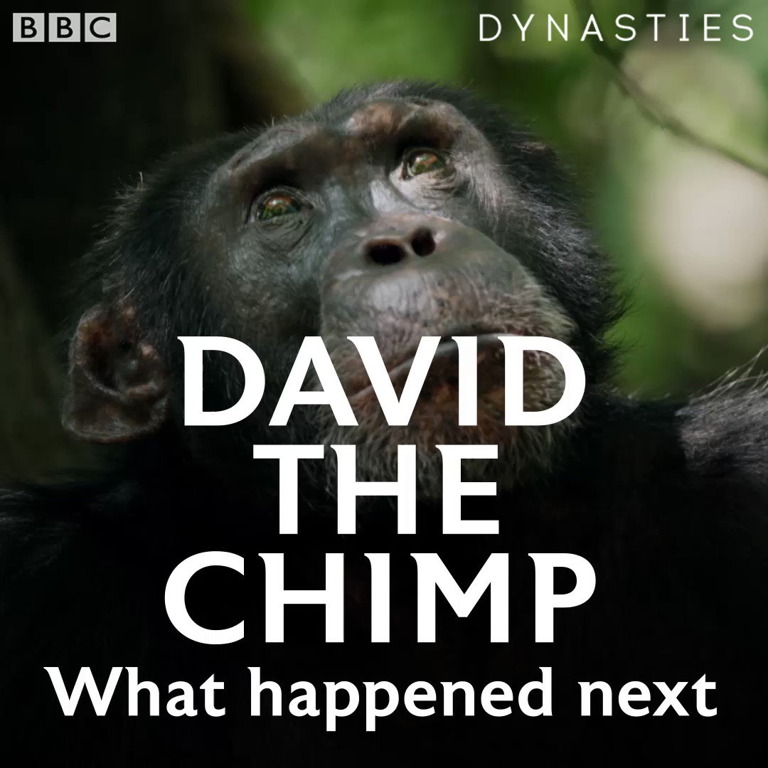 *Spoiler alert* Heres what happened to David after the cameras stopped rolling 💚 #Dynasties