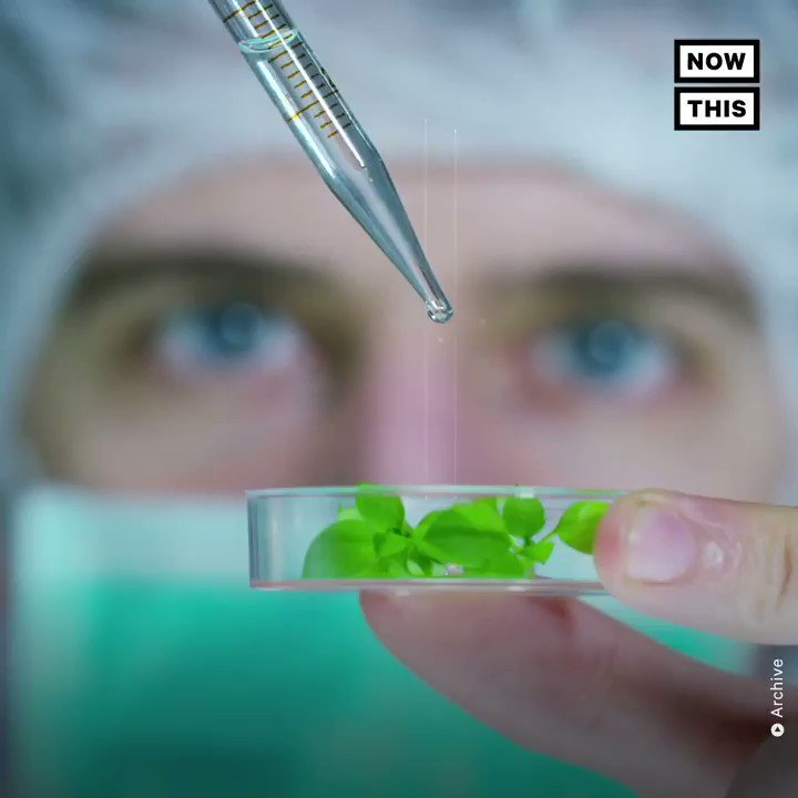 This weed-testing lab in lied about pesticide results over a four-month span
