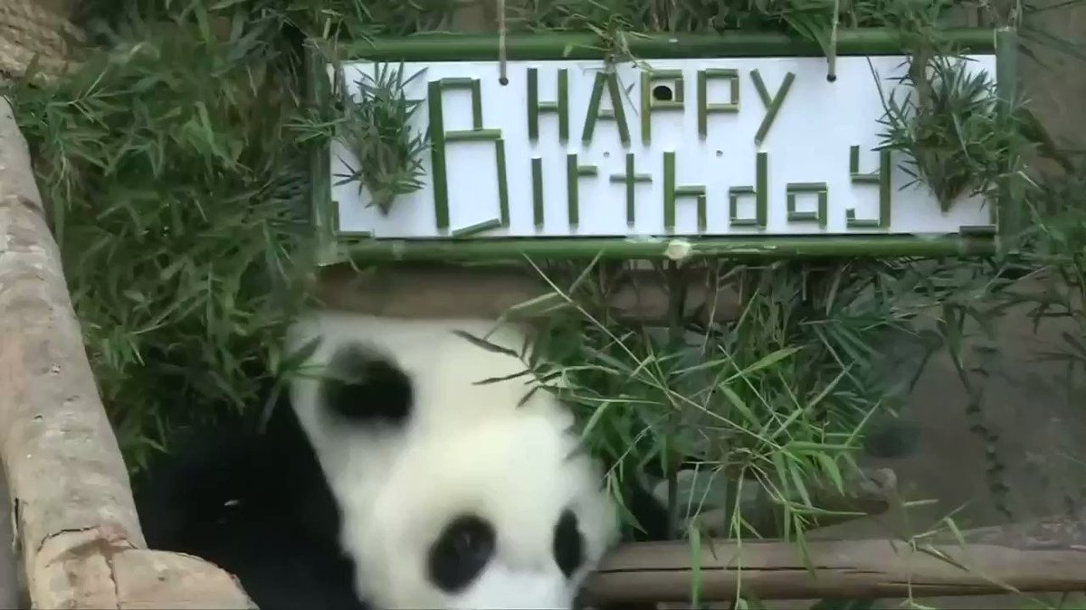 ICYMI: Malaysia's national zoo throws a surprise birthday party for panda Nuan Nuan
