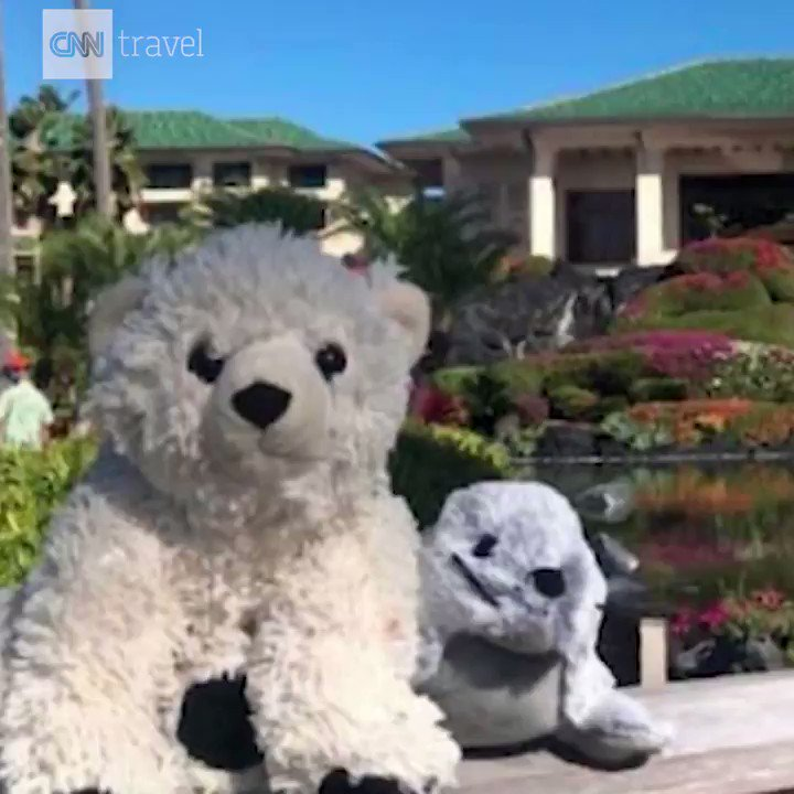 A little boy accidentally left his teddy bear, Sutro, at a hotel in Hawaii, so staff gave the lost bear and his companion, a stuffed seal named Kauai, the five-star spa treatment