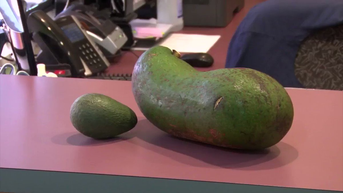 This could be the world's heaviest avocado https://cnn.it/2BaZkkQ