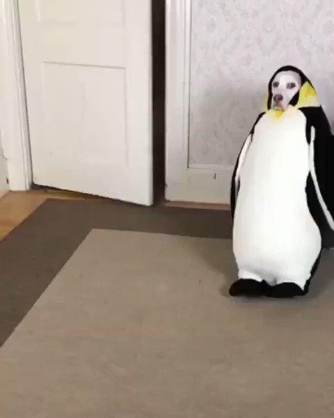 犬とペンギンが合体した結果?超シュール過ぎる!