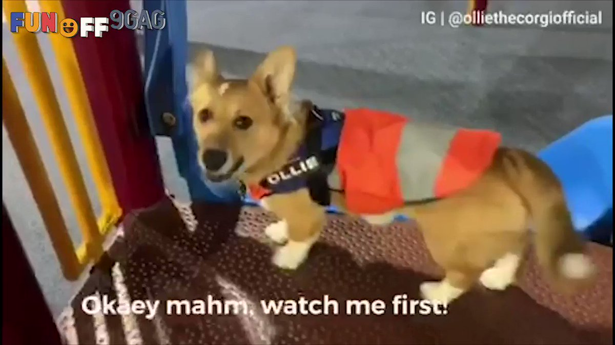 Teaching my hooman how to use the slide Congrats to @olliethecorgi_  on becoming #9GAGFunOff Week 14 winner! Submit your videos to http://funoff.9gag.com to win $10,000 and get famous!
