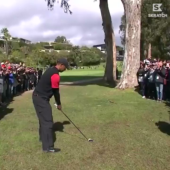 Video Of This Tiger Woods Shot Today Is Going Viral