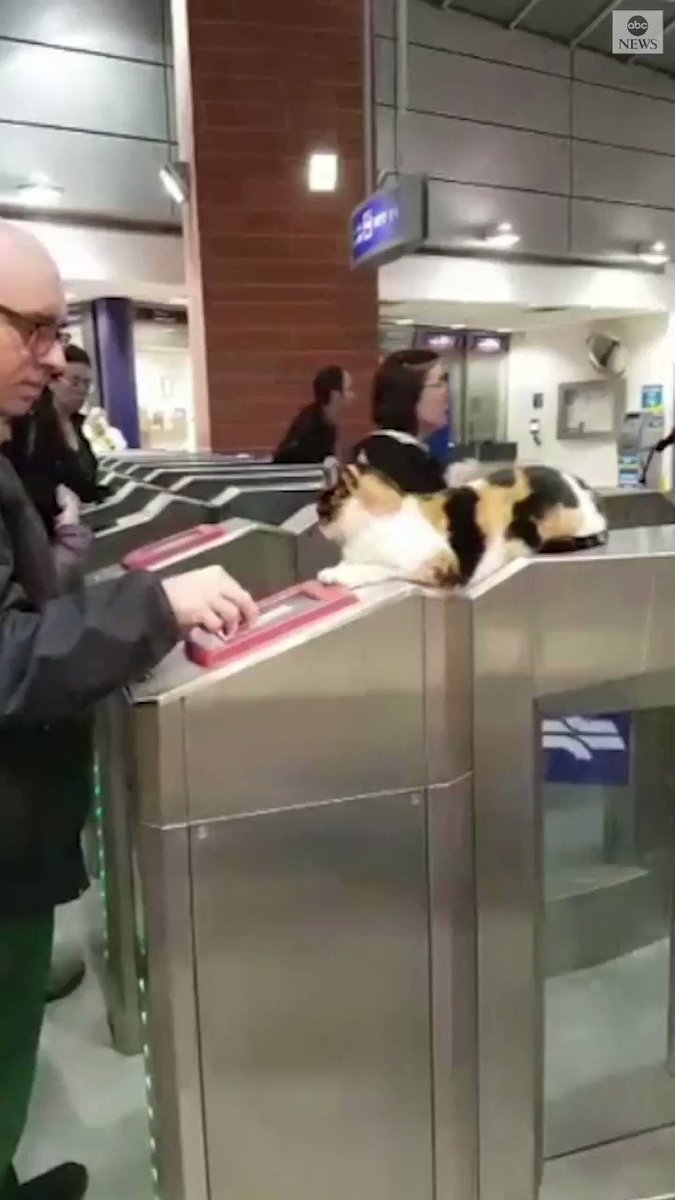 WELCOME ABOARD: Mitsi the cat greets rail passengers in central Israel, keeping her cool as commuters stream past. https://abcn.ws/2DM1N5K