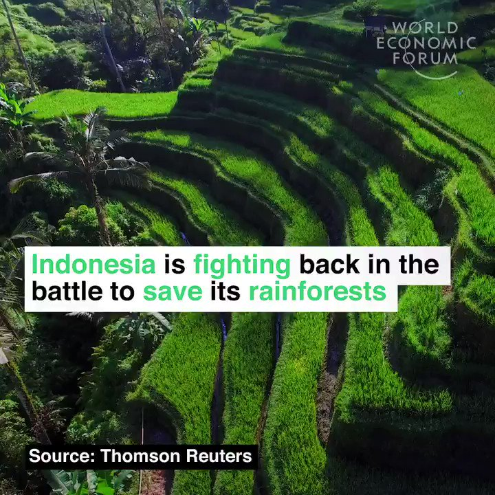 Rain forest destruction in Indonesia decreased in 2017.  Thanks to determined measures by government and business. Innovative partnership with Norway contributed. Great news for climate and environment. For orangutans and tigers.😁👍😁